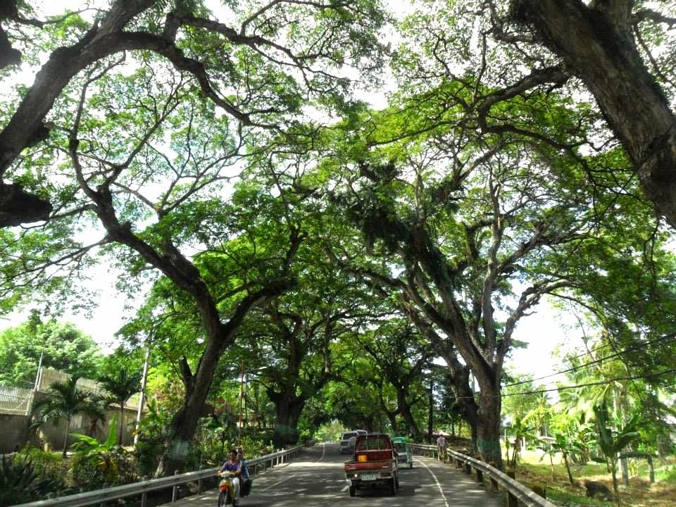 Running Priest Graces Naga City, Cebu To Protest EJK Of Trees